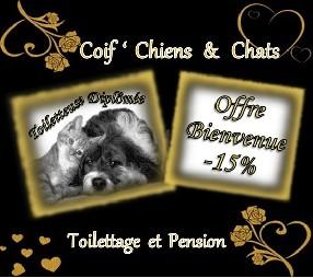 Coif ' Chiens et Chats Salon de Toilettage et Pension Familiale Holving