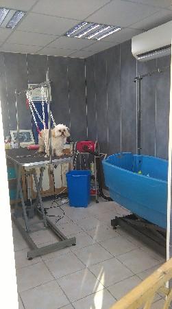 le salon de toilettage avec très grande baignoire sur châssis électrique pour grands chiens